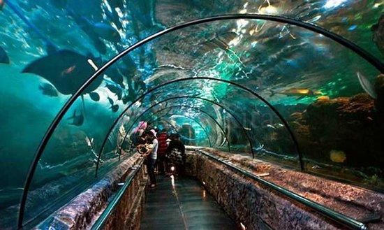 wisata akuarium di indonesia